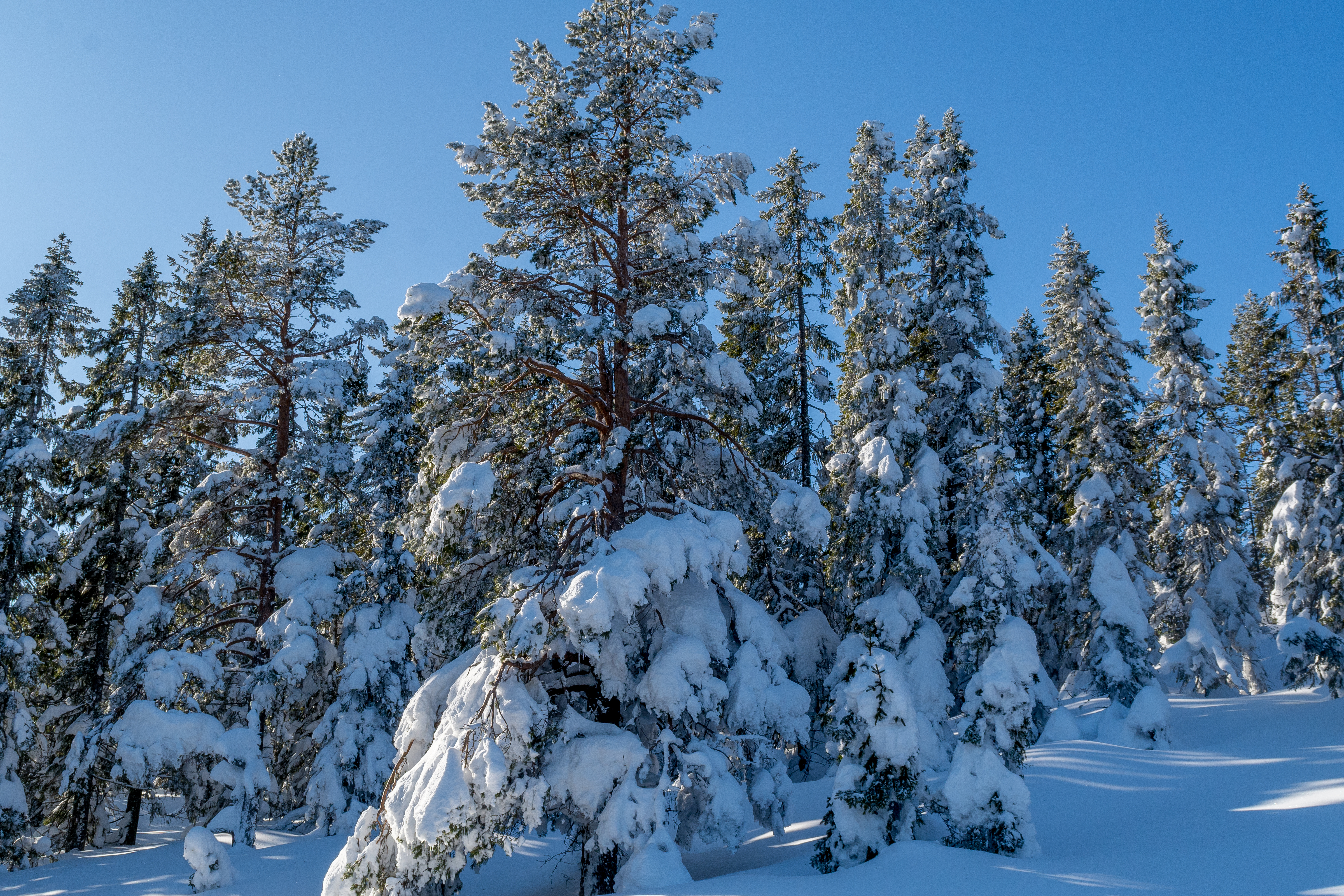 Skuleskogen (8)